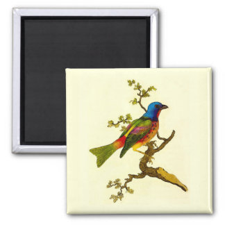 Painted Bunting Bird Refrigerator Magnet
