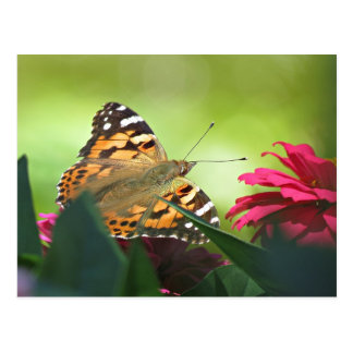 Painted Butterfly and Zinnias Postcard