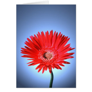 Painted Daisy Card