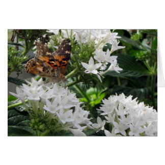Painted Lady Butterfly Birthday Card