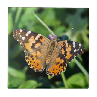 Painted Lady Butterfly Ceramic Photo Tile
