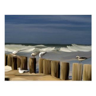 Painted Seagulls Postcard