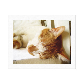 Painted sleeping cat scene canvas print