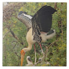 Painted Stork & youngones,Keoladeo National Tile