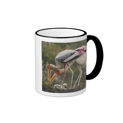 Painted Storks & youn one at nest,Keoladeo Coffee Mugs