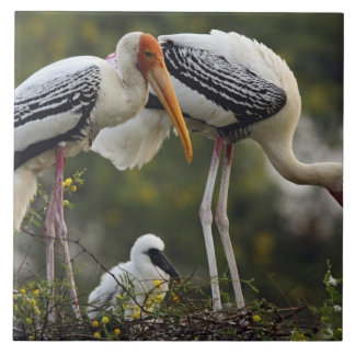 Painted Storks & young one at nest,Keoladeo Ceramic Tile