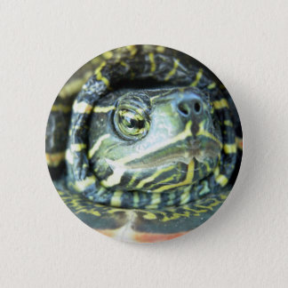 Painted Turtle (Chrysemys picta) 2 2 Inch Round Button