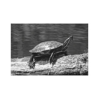 Painted Turtle on a Log (B&W) Canvas Print