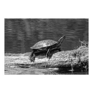 Painted Turtle on a Log (B&W) Photo Print
