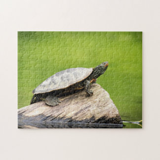 Painted Turtle on a log Jigsaw Puzzle