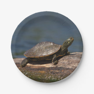 Painted turtle on a log paper plate