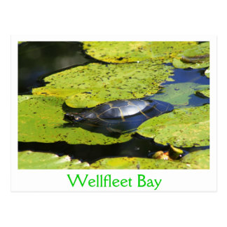 Painted Turtle Water Lily Postcard
