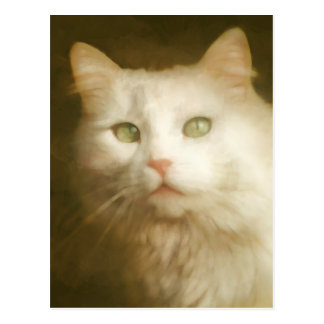 Painted white cat postcard