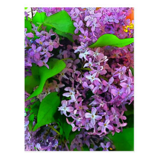 Painterly lilacs postcard