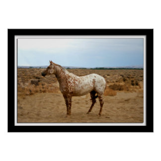 Painterly photo of an Appaloosa horse Poster