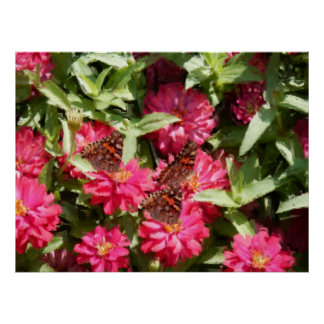 Painterly Watercolor Butterflies Hot Pink Zinnias Poster