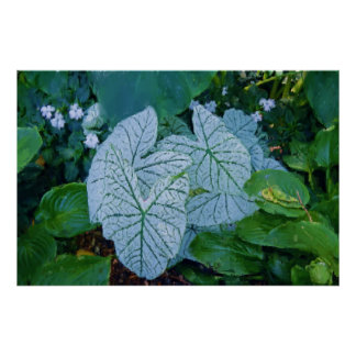 Painterly Watercolor White Caladiums 36x27 Inch Poster