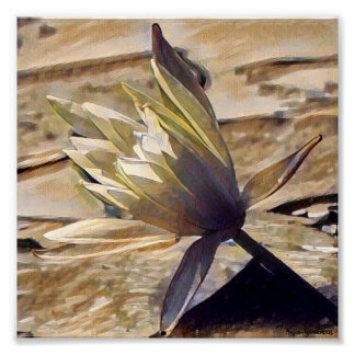 Painterly Waterlily 7x7 Archival Matte Poster