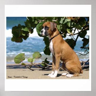 Painting_Heidi, Boxer - Trinidad & Tobago Poster