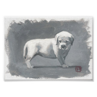 Painting Of A Puppy Looking Down Poster