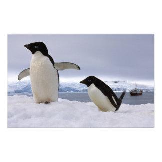 Pair Adelie penguins Antarctica Photograph