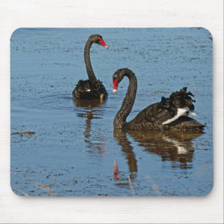 Pair of Black Swans Mouse Pad