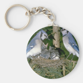 Pair of Blue Jays with young Keychain
