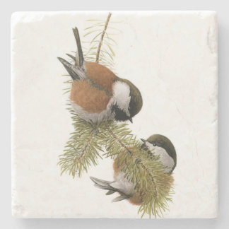 Pair of Chestnut-backed Chickadee on Pine Tree Stone Coaster
