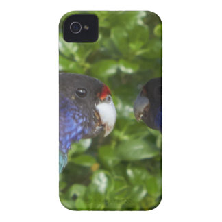 Pair of cocky's 28's iPhone 4 case