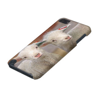 Pair of commercial Targhee Lambs iPod Touch (5th Generation) Cases