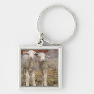 Pair of commercial Targhee Lambs Silver-Colored Square Keychain