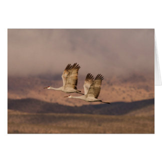 Pair of Cranes in the New Mexico Skies Card