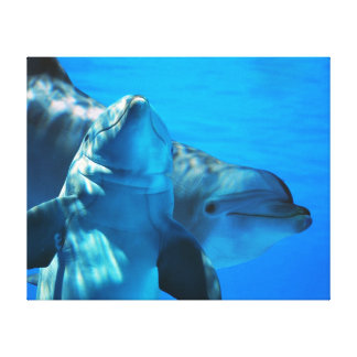 Pair of Curious Dolphins Picture Gallery Wrapped Canvas Print