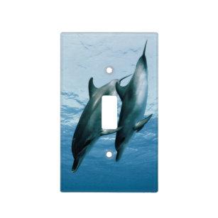 Dolphin Plates   Zazzle CA