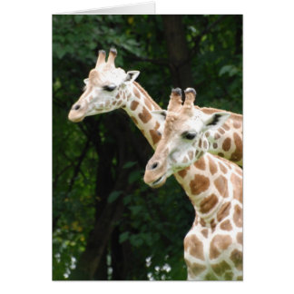 Pair of Giraffes  Greeting Cards