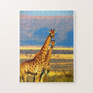Pair of Giraffes. Jigsaw Puzzle