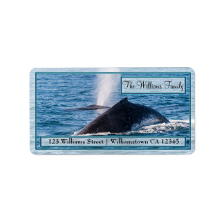Pair of Humpback Whales Address Labels