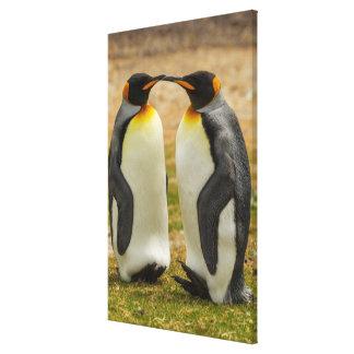Pair of King Penguins, Falklands Canvas Print