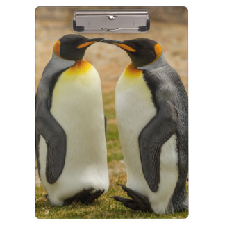 Pair of King Penguins, Falklands Clipboard