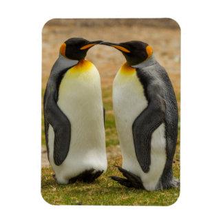 Pair of King Penguins, Falklands Magnet