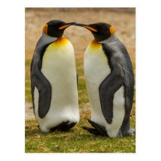 Pair of King Penguins, Falklands Postcard