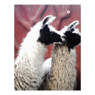 Pair of Llamas Letterhead Design