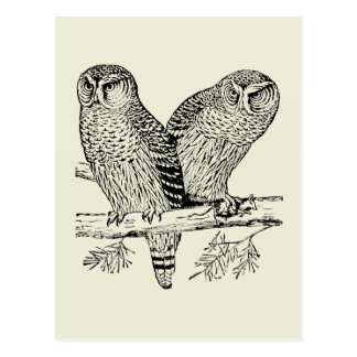 Pair of Owls Postcard