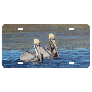 Pair of Pelicans License Plate