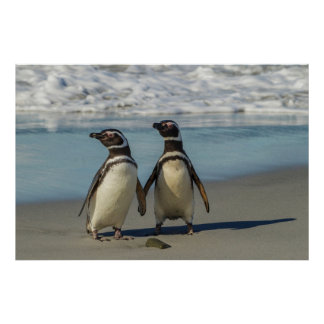 Pair of penguins on the beach poster