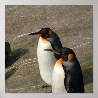 Pair of Penguins Poster Print