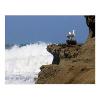 Pair of Seagulls Postcard