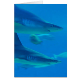 Pair of Sharks  Note Cards