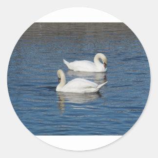 Pair of Swans Classic Round Sticker