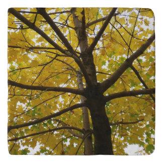 Pair of Yellow Maple Trees Autumn Nature Trivet